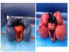 bouncing-castle-hire-cork-bouncy-boxing